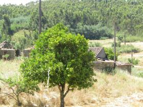 Image No.23-Chalet de 3 chambres à vendre à Sardoal