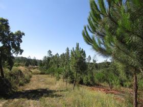 Image No.2-Terrain à vendre à Sardoal