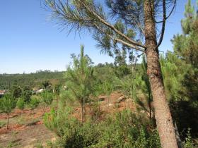 Image No.5-Terrain à vendre à Sardoal