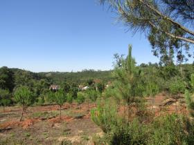 Image No.4-Terrain à vendre à Sardoal
