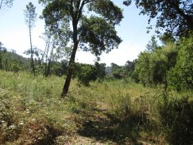 Image No.12-Terrain à vendre à Sardoal