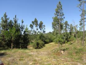 Image No.15-Terrain à vendre à Sardoal