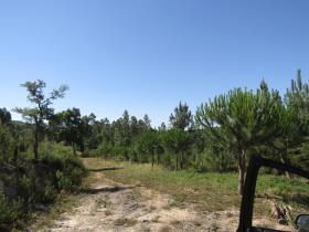 Image No.16-Terrain à vendre à Sardoal