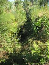 Image No.6-Terre à vendre à Sardoal