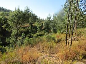 Image No.10-Terre à vendre à Sardoal
