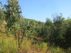Image No.14-Terre à vendre à Sardoal
