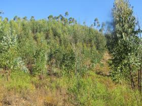 Image No.15-Terre à vendre à Sardoal