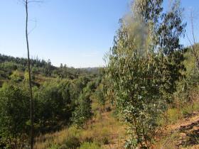 Image No.17-Terre à vendre à Sardoal