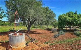 Image No.6-4 Bed Finca for sale
