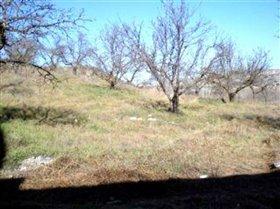 Image No.1-Terre à vendre à Arenas del Rey