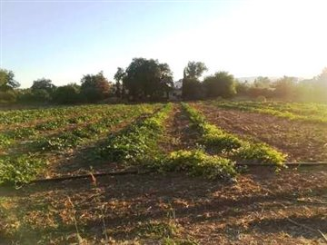 16837-residential-land-for-sale-in-polemifull