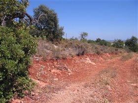 Image No.2-Terre à vendre à Santa Bárbara de Nexe
