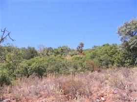 Image No.3-Terre à vendre à Santa Bárbara de Nexe
