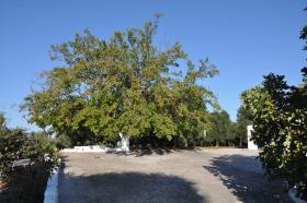 Image No.2-Chalet de 3 chambres à vendre à San Vito dei Normanni