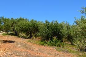 Image No.7-Terre à vendre à Maleme