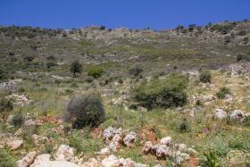 Image No.1-Terre à vendre à Drapanos