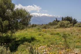 Image No.5-Terre à vendre à Drapanos