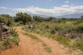 Image No.13-Terre à vendre à Drapanos