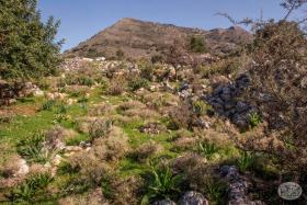 Image No.2-Terre à vendre à Kambia
