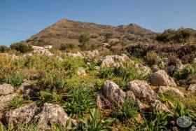 Image No.4-Terre à vendre à Kambia