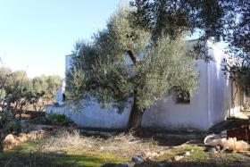 Image No.3-Villa de 3 chambres à vendre à Ostuni