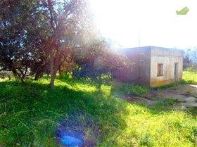 Image No.8-Terre à vendre à Sao Bras de Alportel