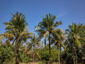 Image No.7-Terre à vendre à Ban Khao