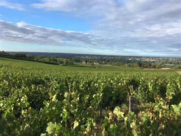 wijngaard-Riousse