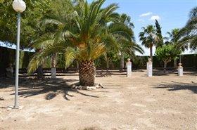Image No.32-Finca de 4 chambres à vendre à Orihuela