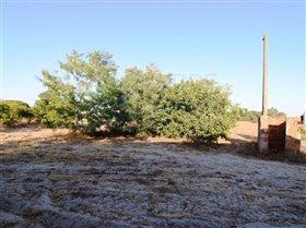 Image No.12-Ferme de 3 chambres à vendre à Pinhal Novo