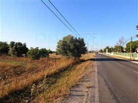 Image No.18-Ferme de 3 chambres à vendre à Pinhal Novo