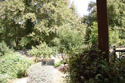 Back-garden11