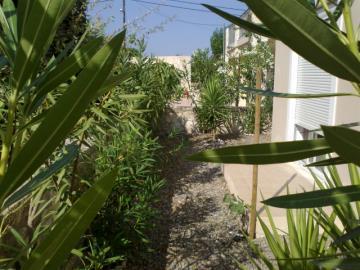 14-Back-garden1