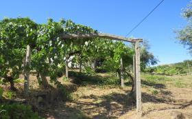 Image No.23-Maison / Villa de 3 chambres à vendre à Sertã