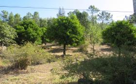 Image No.28-Ferme de 3 chambres à vendre à Cabeçudo