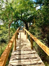 2-Walkway-to-the-Malachite-Suite-in-the-trees