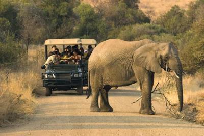 leadwood-elephant