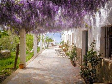 wisteriaonsideterraceaaebdbjpg21