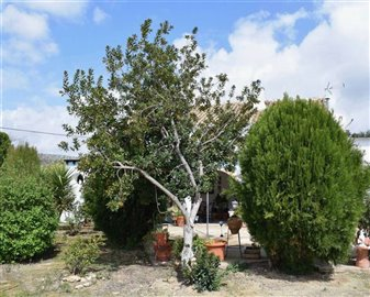 2018121012465400000066finca-for-sale-country-