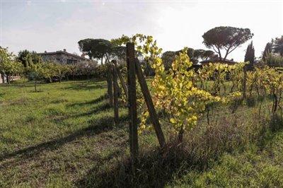 Villa_vendita_Roma_foto_print_628067718