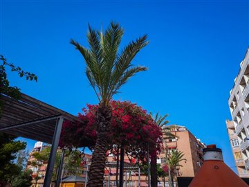 17721-for-sale-in-torrevieja-2007098-large