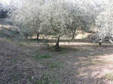 AZ-Italian-Properties-Fosdinovo--27-