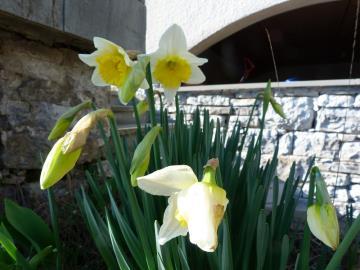better-spring-flowers