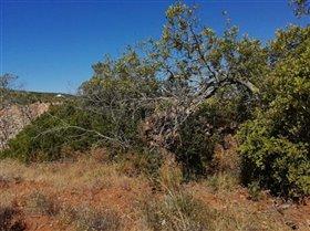 Image No.4-Terrain à vendre à Sao Clemente