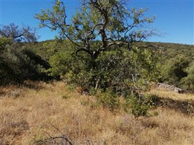 Image No.5-Terrain à vendre à Sao Clemente