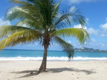 Sea-and-palm-tree-beach-view