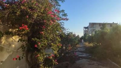 Viale-retro-giardino