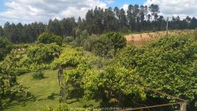 Image No.5-Maison de campagne de 4 chambres à vendre à Cernache do Bonjardim