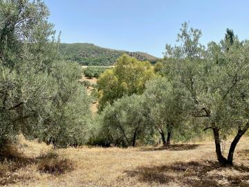 Land-and-views-2