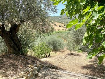 Land-fig-views